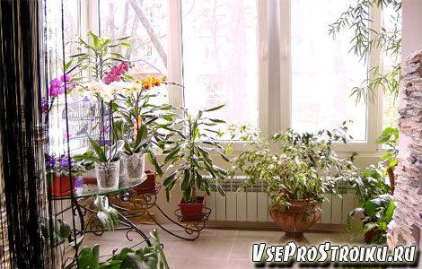 rasteniya-v-interere-kvartiry2-1270645