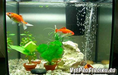 kak-ustanovit-filtr-v-akvarium-3389019