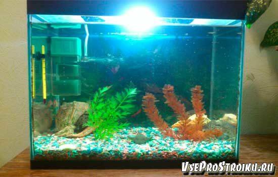 kak-ustanovit-filtr-v-akvarium0-4814971
